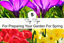 Gardening / Gardening and outdoor space/patio ideas and tips