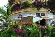 jardins dos meus sonhos