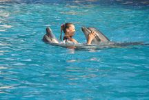 Dolphin Therapy Dolphins / Dolphin Therapy Land Turkey- Antalya-Belek