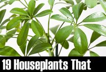 House Plants / by BonnyJean Cronmiller Burns