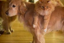 hayvan dostlukları