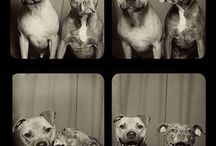Dogs <3 / <3