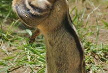 mókuska