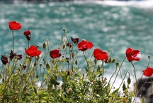 Andros flowers / Andros Island Flowers
