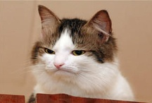 Disapproving animals / Not only do they disapprove, they're also very, very disappointed in you. / by Boo Kelwick