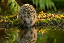 foto animali