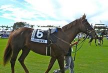 Wellington Equestrian Living