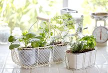 Green DIY projects for in and around the kitchen / Do you dream about having a veggie garden full of rosy tomatoes and crispy fresh herbs, but you don't have the place or the time? No worries, with a few simple mini-projects you too can grow all kinds of lovely things in a small garden, on your balcony, or on your windowsill. And what's more: new life grows, even from waste!