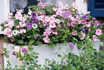 shade flower boxes