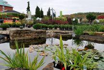 Jardin2m à l'automne / L'automne et ses couleurs  #couleursautomne #jardinage #horticulture