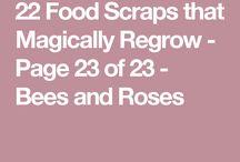 Scraps to plants
