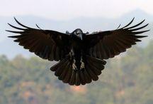 Rooks and Flight