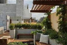 roof top garden / Modern roof top garden inspiration