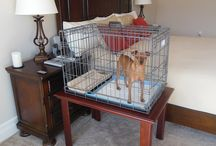 Puppy Apartment Nightstand / This optional PTPA Nightstand is the best way to train your new puppy while you are sleeping.