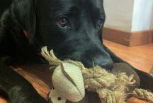 Sax- My Dog / My Dog