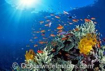 Ocean- Great colour inspiration