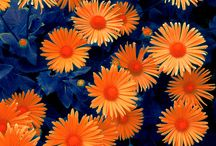 Color Combo: Orange And Blue