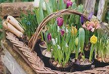 Garden /OUTDOOR IDEAS