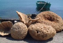 Narural Sea Sponges