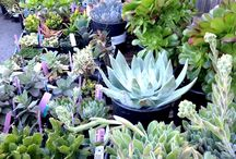 succulents.. cause they're hard to kill