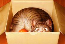 I gatti