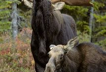 Life's a zoo! / by Lara McGlynn