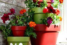 Gardening and plants / gardening and plants