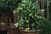 Parapetowy ogródek
