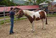 (horses)