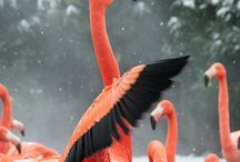 flamingó :)