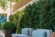 Hotel Garden landscape