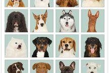 Hundeplakater