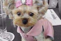 Cutest Pups / by Monica Ledbetter