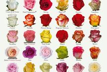 Flower #Cute