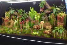 lihansyöjäkasvit