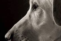 Dogs and writings