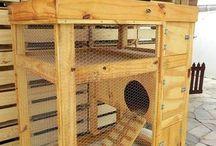 casa de coelho
