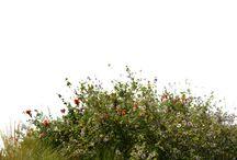 plantas PNG