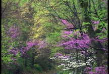 Waterford, Leesburg Reston area Virginia