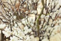 Flowers / by Susan Tullos