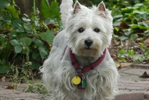 For the LoVE of WESTIES / 8 PROS   