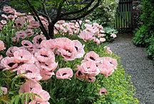 Mummy's garden