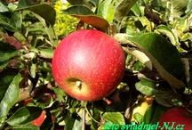 Naše jabloně / Zahrada