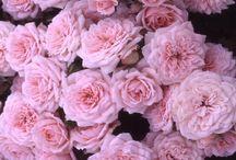 :: Floral ::