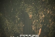 Avance 2015 / Secretos del bosque
