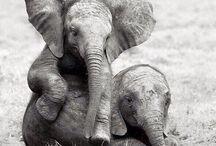elephants ❤