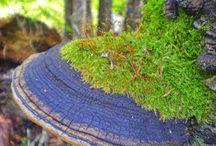 Fungos e Cogumelos