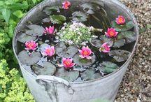 ZAHRADA-voda na zahradě
