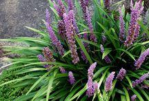 Gardening  - Low growing plants