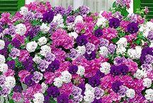Flowerpower outdoor